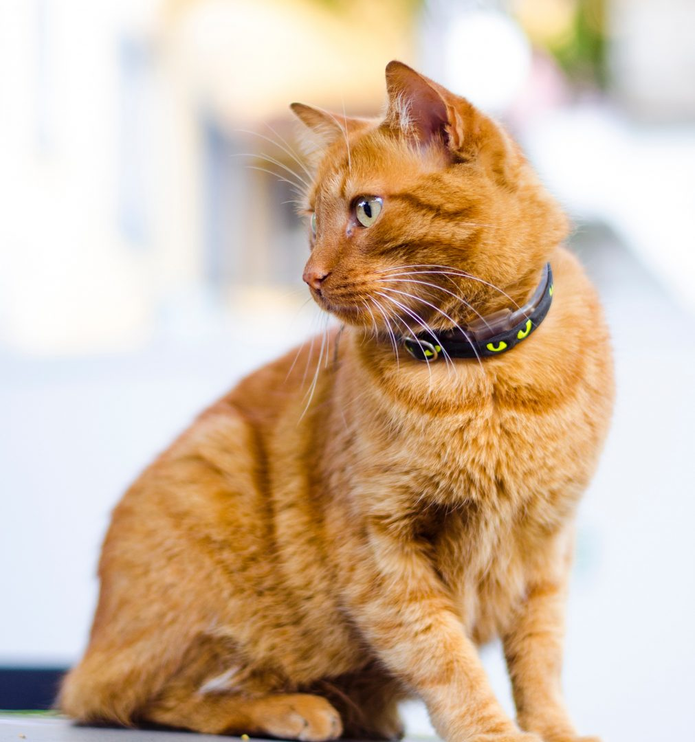 pet-collars-and-gear