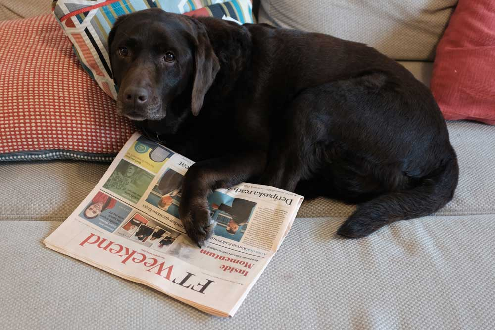 dog-reading-financial-times