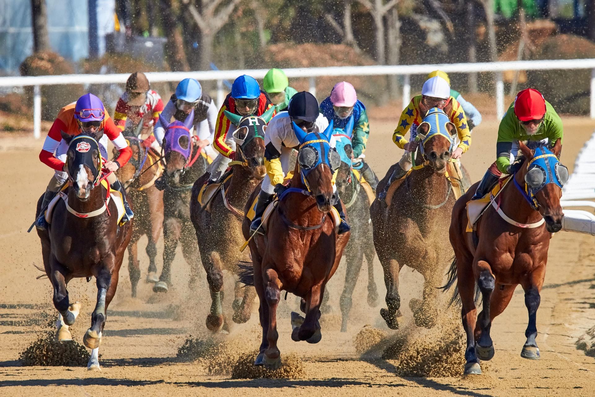 grand-national-horses