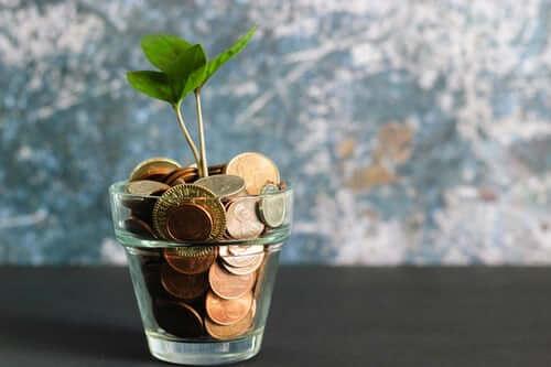 money-tree-business