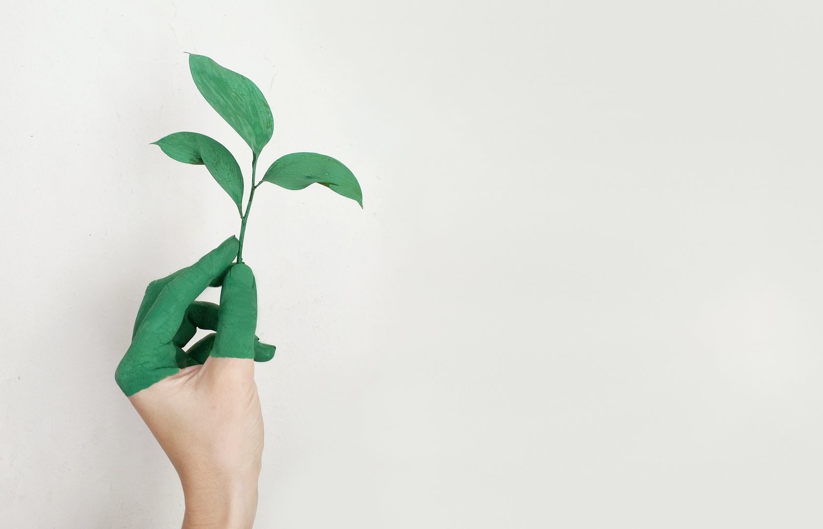 hand-growing-plant