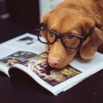 Coronavirus Causes Increase in Dog Ownership