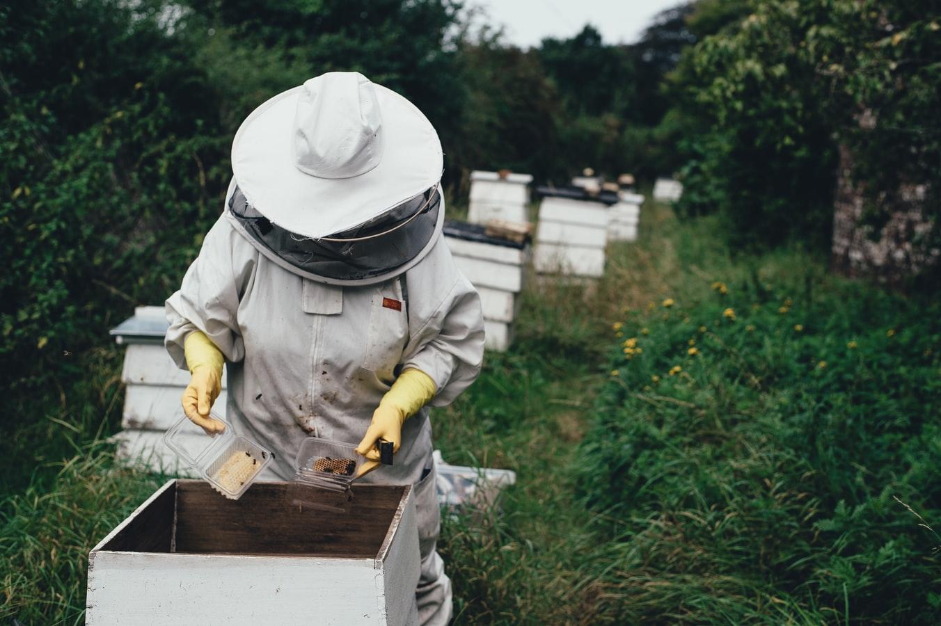 Bees, tech startup, agtech