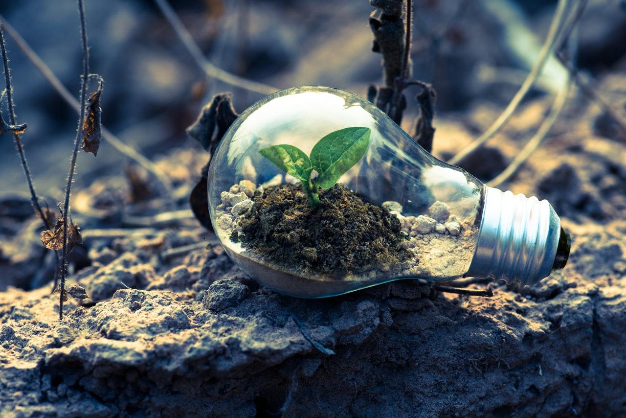 sugi-environment-carbon-impact