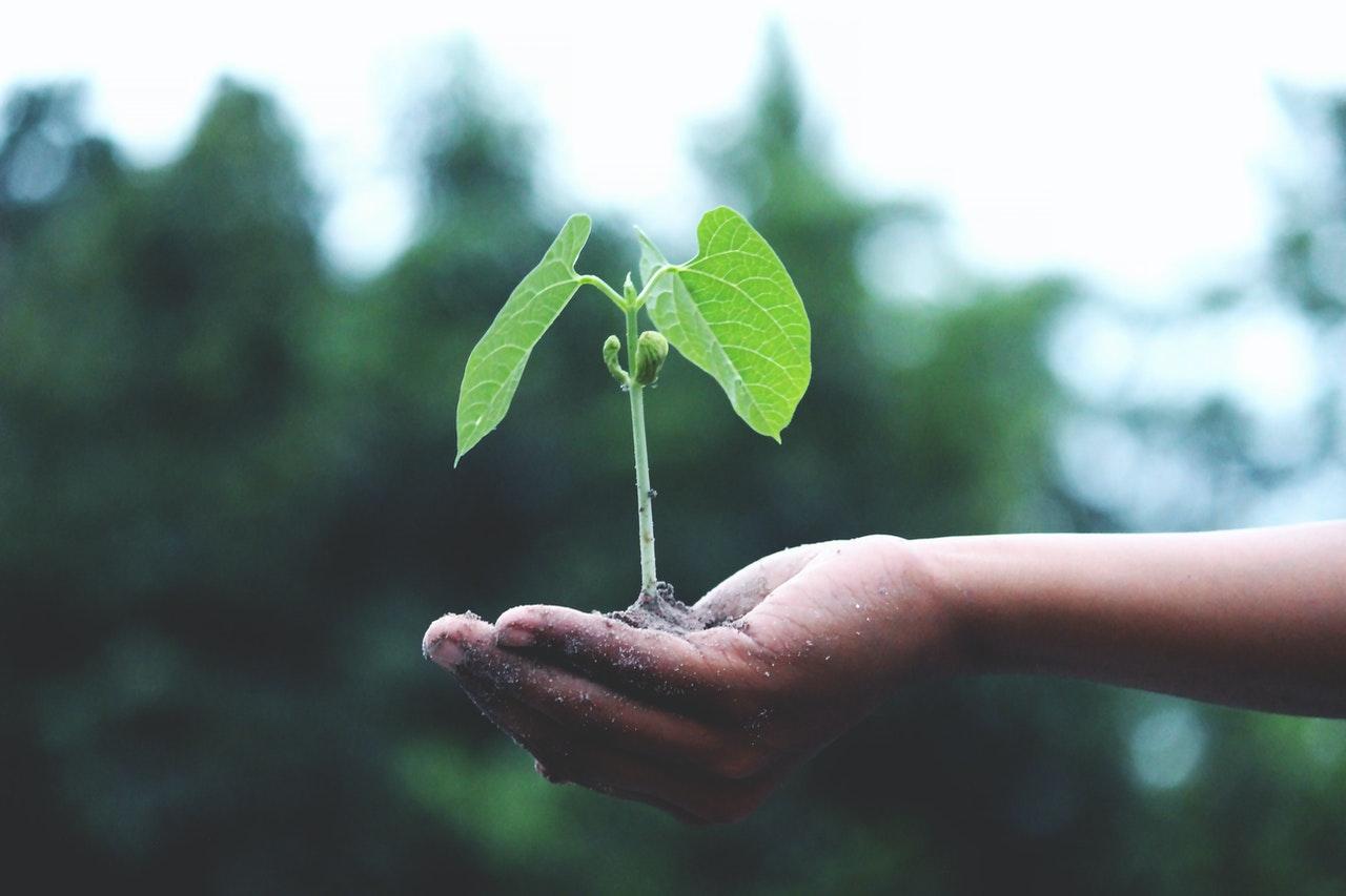 ecosia-plant-trees-co-op