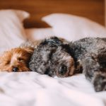 50% Surge in Post-Pandemic Pet Relocation Demand
