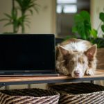 Is Pet Tech the Future?